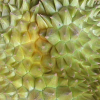 Fresh durian in Taipei, Taiwan