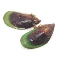 Greenshell mussels of New Zealand