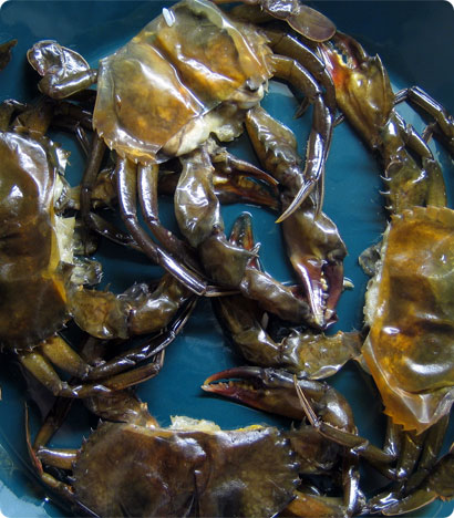 Softshell crabs before steaming