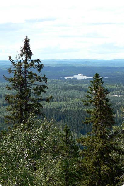 Koli, Finland. Trees, trees and more trees